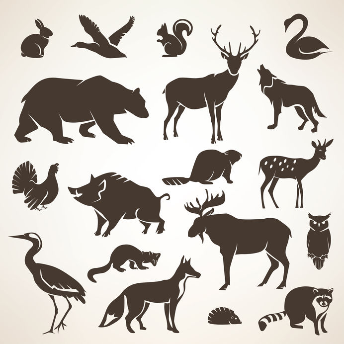 faune sauvage